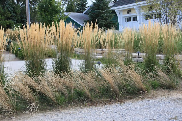 michigan native plants