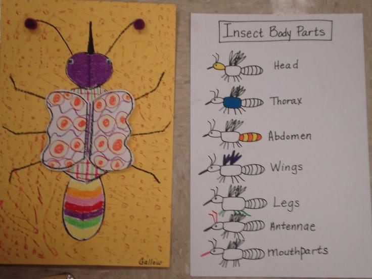 84 Best Minibeast Ks1 Images On Pinterest