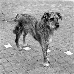 """El Blog de la Estrella: El cuento de """"Gós, el perro callejero"""" (algo largo)"""