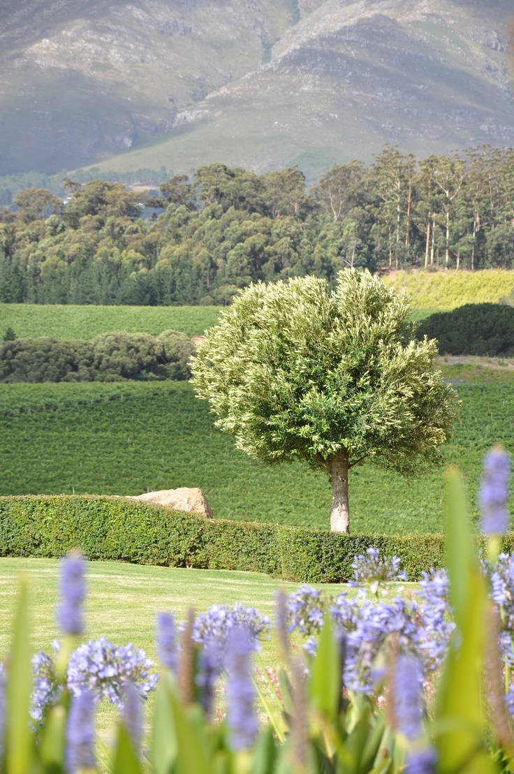 South Afrika, wine road.