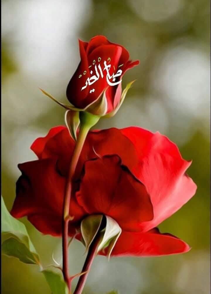 صباح الخير Good Morning Flowers Good Morning Beautiful Images Good Morning Cards