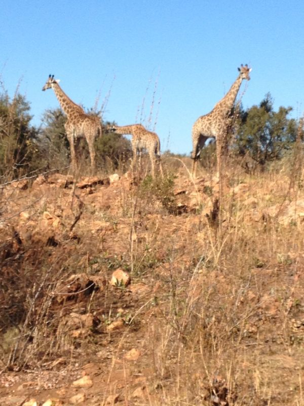 Have you ever been on a Safari in South Africa?