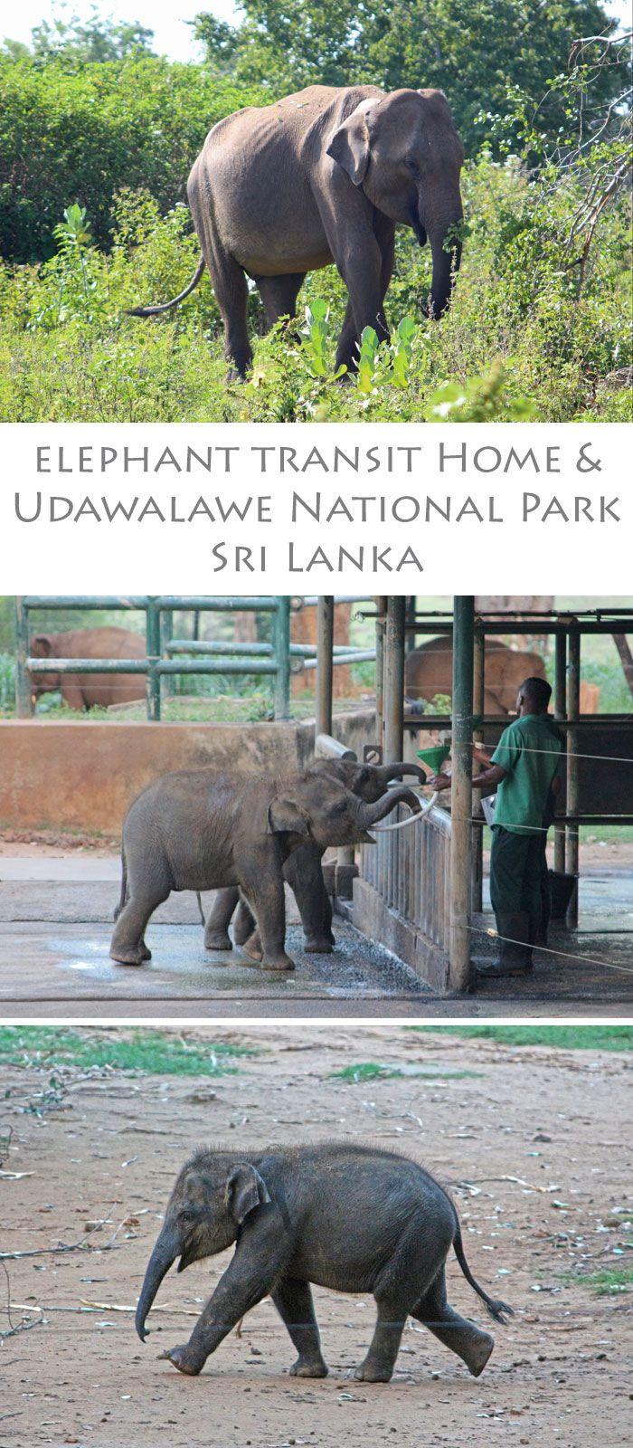 Elephant Transit Home & Udawalawe National Park, Sri Lanka (Elefanten Safari)