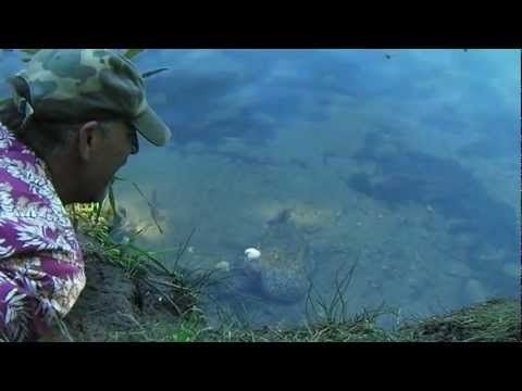 ▶ Survival Fishing (by hand & knife) - YouTube