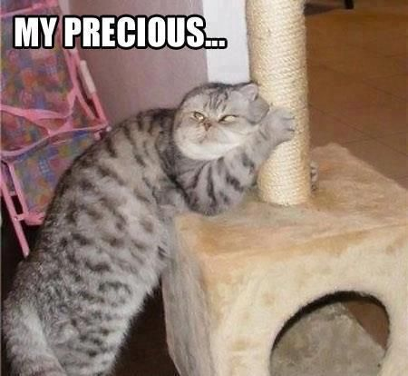 CREEPY CATS ~~ Cats aren't always cute. #8 would scare the hell out of me! Totally something MY cat would do to me! LOL  (14 crazy cat pics)