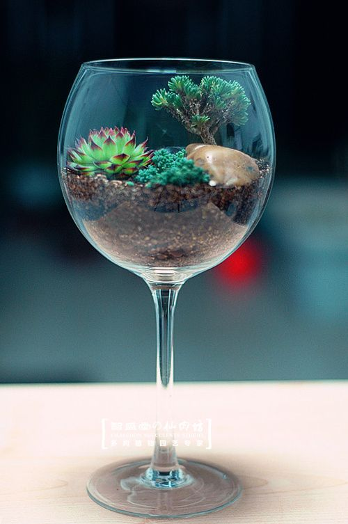 Personalized Succulents combination boutique / with pots / Advanced red wine…