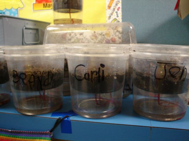Kinder Garden: We Planted The Vegetables From Growing Vegetable Soup