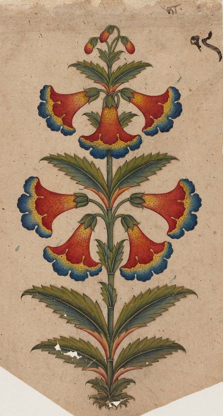 Decorative motif in the form of a flowering plant.  Indian, Pahari about 1850.  Object Place: Punjab Hills, Northern India.