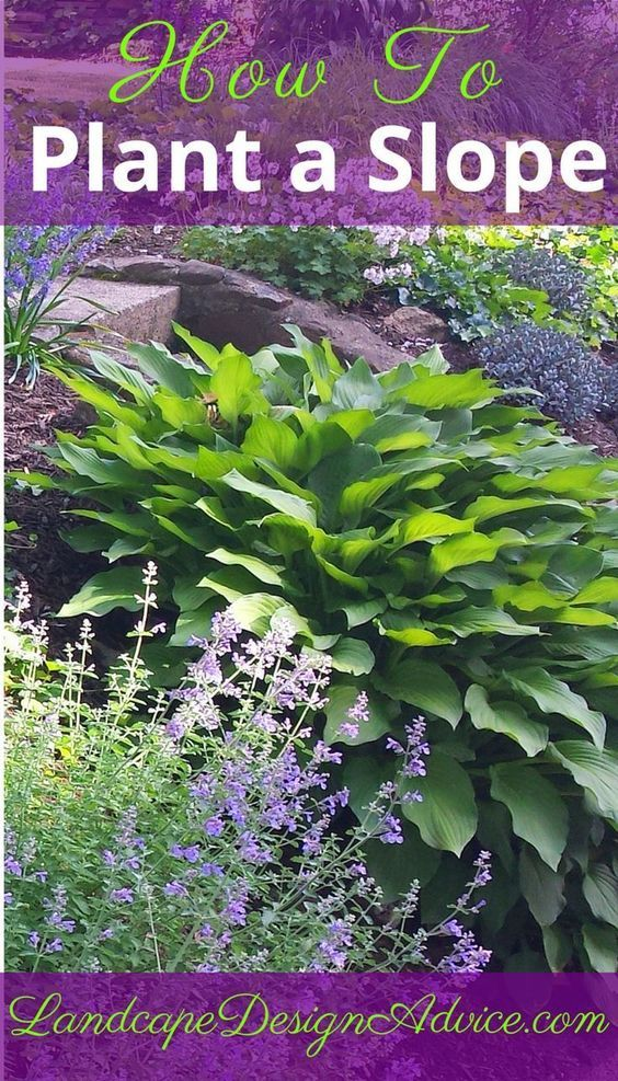 How do you plant a slope? Use colorful, textured, drought tolerant plants in masses. Find out more here.