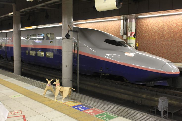 DOGTokyo2017 The DOGs are travelling by Shinkansen 新幹線 . http://tinyurl.com/z8wge6p