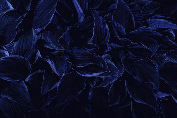 Dark Blue Flowers Tumblr Wallpaper High Quality Wallpaper ...