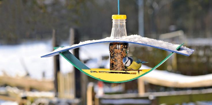 Die kleine Blaumeise ist der erste Gast am Futterhäuschen. Dessen fröhliche Farben locken bestimmt noch viele weitere Vogelarten an. Foto: Living Art