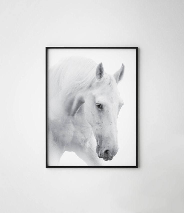 Horse print, black and white horse print, horse, wild horse, scandinavian horse, horse wall art, horse photography, white horse poster by PosteraDesign on Etsy https://www.etsy.com/listing/533024800/horse-print-black-and-white-horse-print