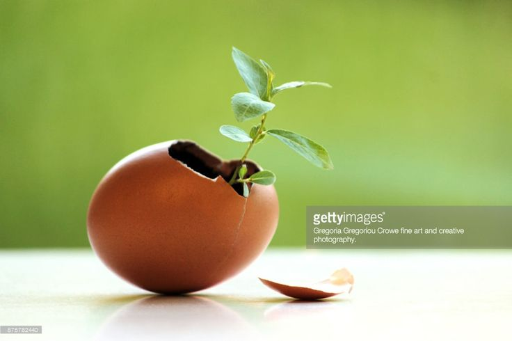 Seedling growing in an eggshell depicting the fragility in our environment.