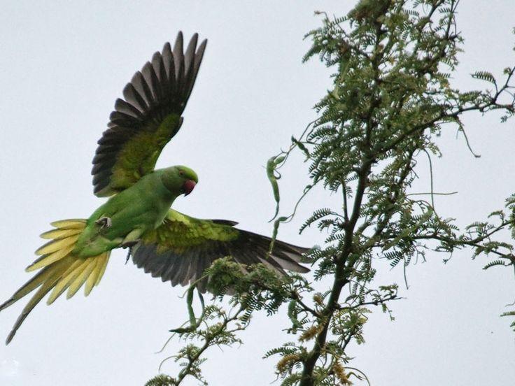 Animal Sanctuaries in Assam, India @ Sanctuariesindia.com