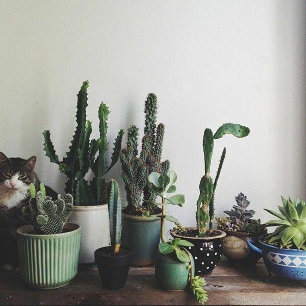 132 besten zimmerpflanzen bilder auf pinterest bonsai zimmerpflanzen und blumen pflanzen. Black Bedroom Furniture Sets. Home Design Ideas