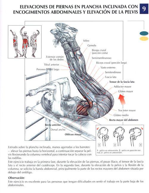 Todos los Musculos y Todos sus Ejercicios [Para el gym]