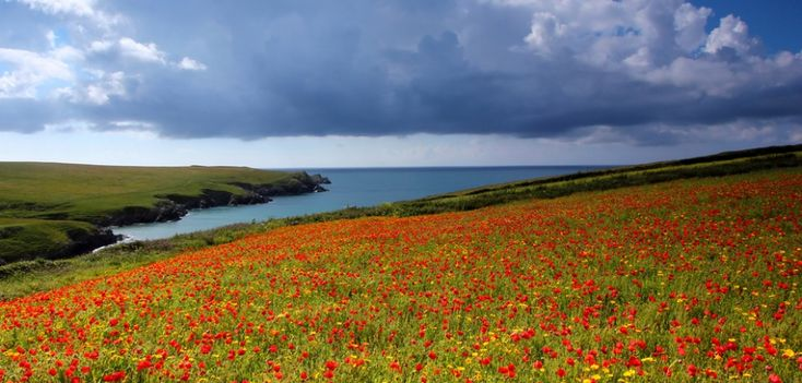 20мест напланете, где природа непожалела красок Корнуолл, Англия