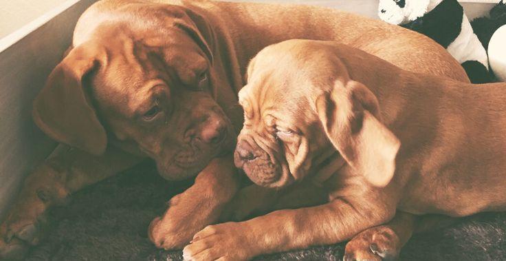 My Girls Kayla & Nona #bordeauxdog