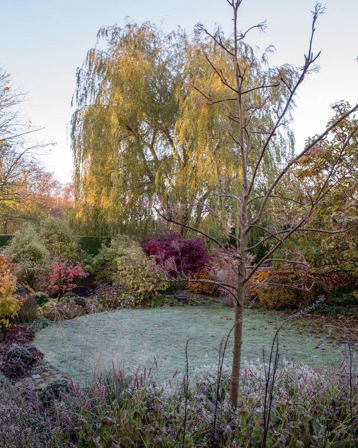 God morgon! Bild från i går morse när det var frost. Om ni är sugna på fler bilder så bloggar jag nästan varje dag på almbacken.se. 🇬🇧Good morning! Photo from yesterday when we had frost in the morning. New blogpost up⬆️. #novemberpåalmbacken #gardendesign #gardeninspiration #trädgårdsinspiration #trädgårdsdesign #havedesign #hagedesign #tuininspiratie #landscapingdesign #gardenarchitecture