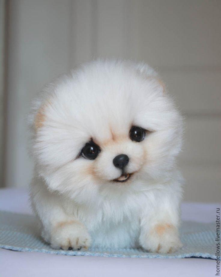Купить Тедди Щенок Кора, порода померанский шпиц - белый, щенок, щеночек, щенок…