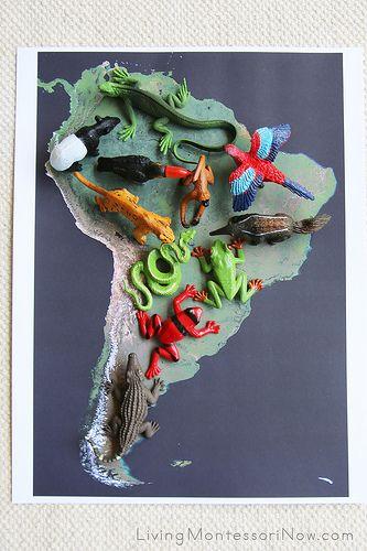 Rainforest Animals on Satellite Map of South America  Living Montessori