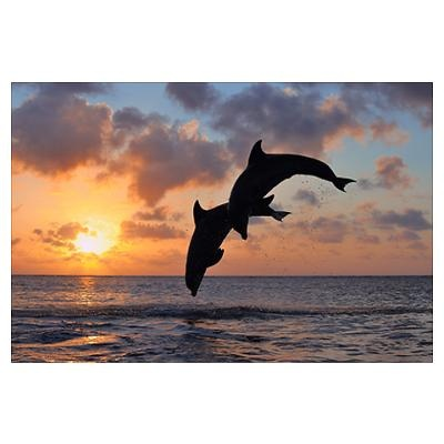 Common Bottlenose Dolphins Jumping in Sea at Sunse Poster