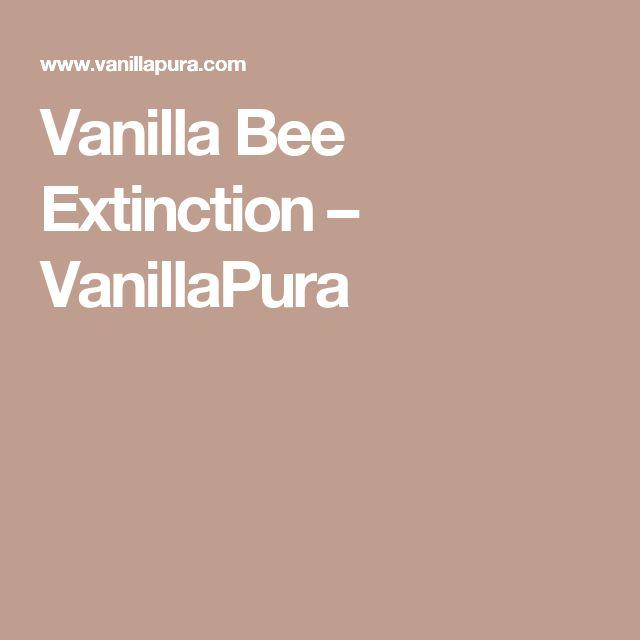 Popular Vanilla Bee Extinction u VanillaPura