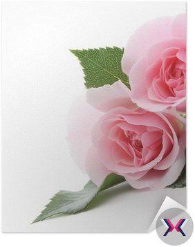 Plakát Pixerstick Růžové růže