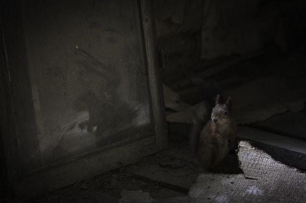 Secret lives, por Kai Fagerström (Finlândia) - Desabitado há cerca de 40 anos, o chalé em Salo, na Finlândia, virou lar deste esquilo vermelho, entre outros animais: http://abr.io/5rEs