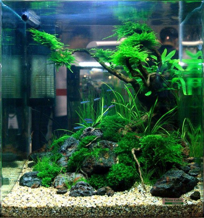 773 best images about aquariophilie on pinterest for Plante aquarium