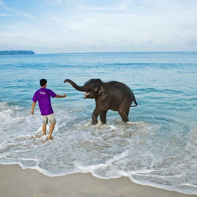 An awesome play date with an incredibly cute baby elephant at Elephant beach at Andaman and Nicobar Island India http://ift.tt/1tCJedV - http://ift.tt/222qVsa