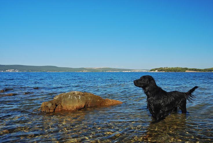 Kleine Abkühlung gefällig? #Sommer #Sonne #Strand #holidays #travel #Haustier ©Ewald Fröch - Fotolia