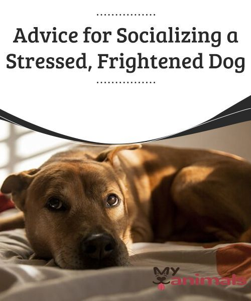 Advice For Socializing A Stressed Frightened Dog Your Dog May