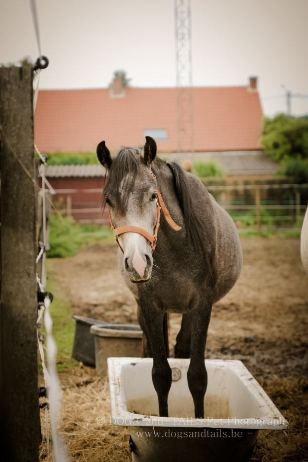 Stichting voor Paarden in nood - Adoptiepaarden
