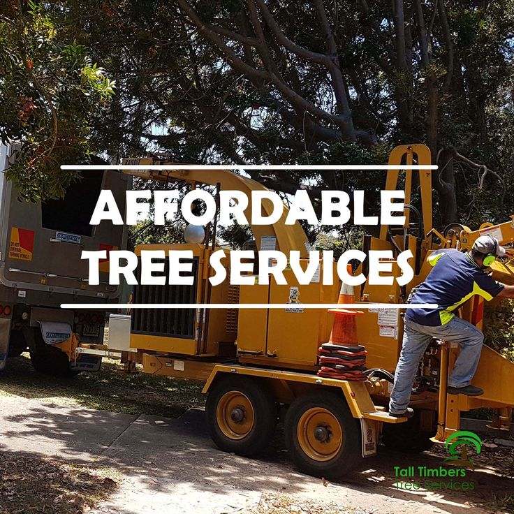 Affordable tree services that answers all tree demand. Our service possesses all you need in terms of expertise, quality, and professionalism. Visit https://talltimberstreeservices.com.au/affordable-tree-services/