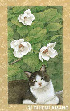 大山蓮華と猫 by Chiemi Amano