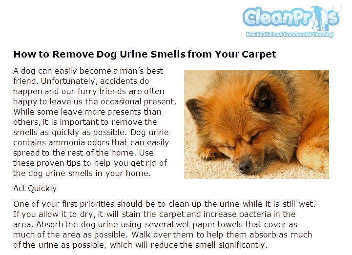 39 Best Clean Pros Carpet Cleaning News Images On