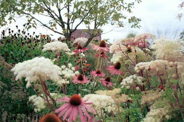 Правило 70/30 это холодоустойчивые многолетники и злаки (нижний ярус), а украшение (верхний ярус) – однолетники и многолетние ярко цветущие растения.