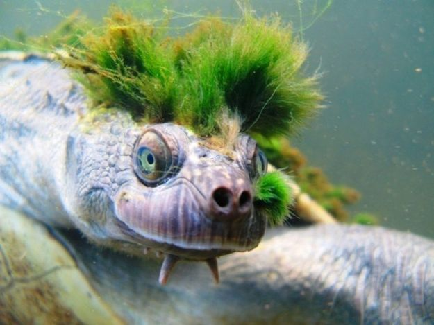 You guessed it: a turtle. | Community Post: 7 Pictures Of Turtles Pretending To Be Other Things