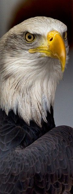 Eyes of Freedom by Kevin Rank on Flickr
