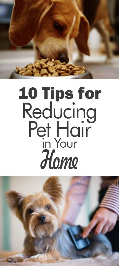10 Tips for Reducing Pet Hair in Your Home