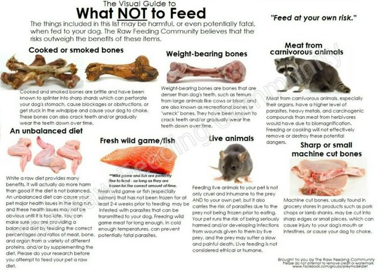 Best 25 raw dog food ideas on pinterest raw food dog diet dog common misconceptions about raw diets a realistic view raw dog fooddog solutioingenieria Images