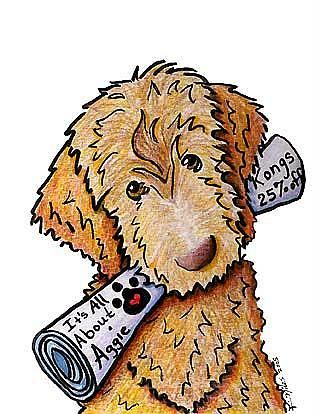 27 best labradoodle images on Pinterest Dog art Animals and