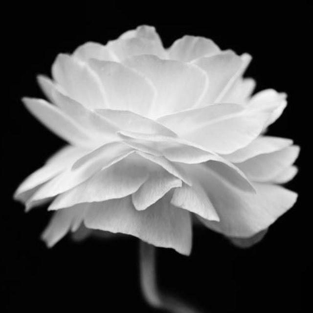 122 besten Flowers Bilder auf Pinterest | Blumen, Schöne blumen und ...