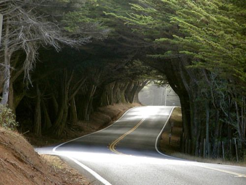 Let's take a drive.: Favorite Places, Purple, Nature, Beautiful, Treetunnel, Trees, Tree Tunnel, Photo, Roads