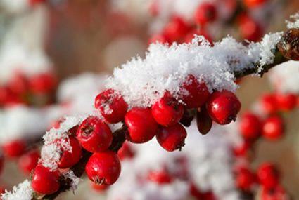 natuur fotos winter - Google Search