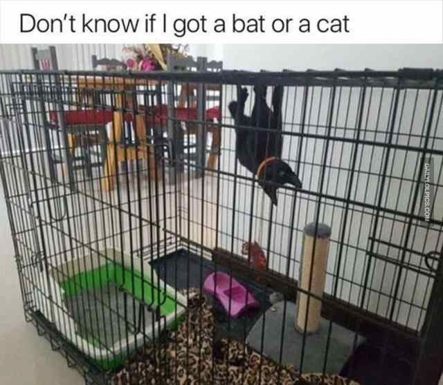 Funny Animal Pictures Of The Day | 24 Pics