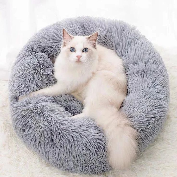 Calming Dog Bed Dog bed, Dogs, Cats, kittens