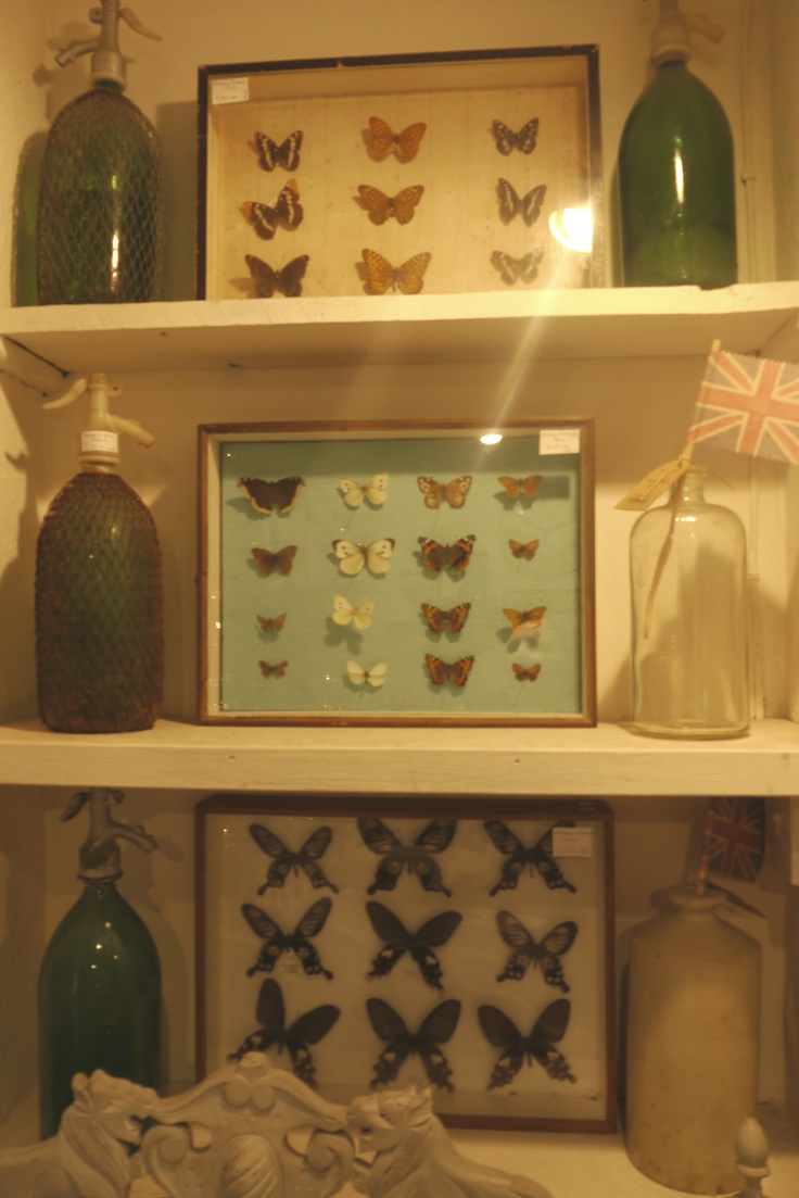 Framed butterfly collections, La Maison